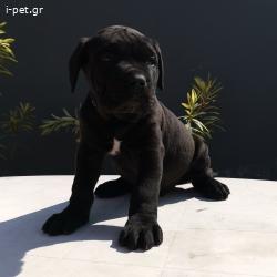 Εκθεσιακα full pedigree