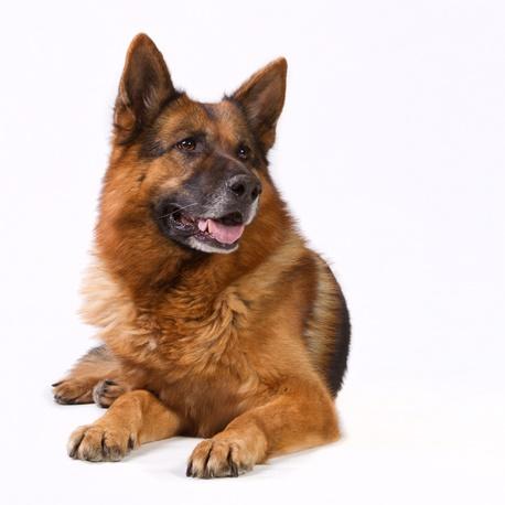 Ιστοσελίδα γνωριμιών για ζώα