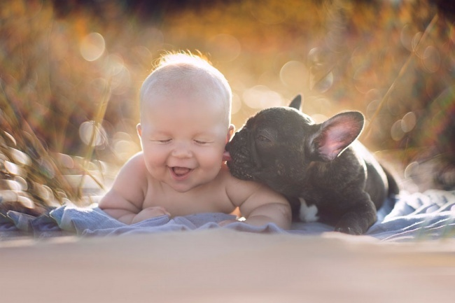 2665110-R3L8T8D-650-452010-R3L8T8D-650-baby-dog-friendship-french-bulldog-ivette-ivens-1-2