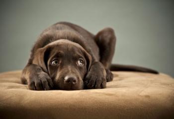 Προστατέψτε τον σκύλο σας από τα βεγγαλικά της Ανάστασης