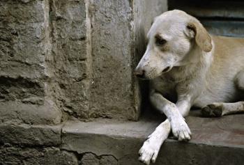 Ένας φόρος  τιμής στους εγκαταλελειμμένους σκύλους της Ελλάδας