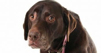 Τι σκέφτεται ο σκύλος σου για σένα; Διαβάστε το και θα βουρκώσετε…