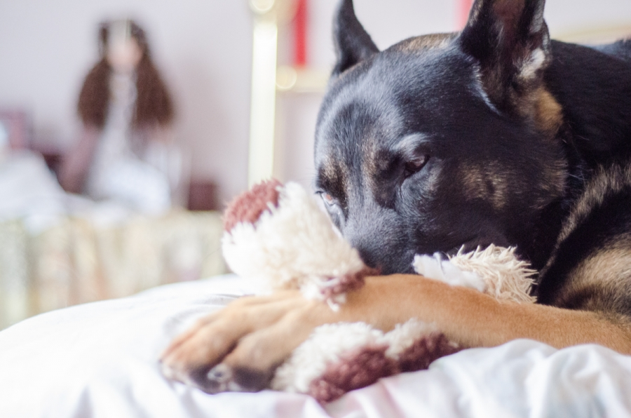 722364696d6f Παιχνίδια σκύλων που μπορείτε να φτιάξετε μόνοι σας στο σπίτι - I-PET.GR