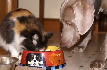 Σκύλος και γάτα δεν πρέπει ποτέ να μοιράζονται την ίδια τροφή!
